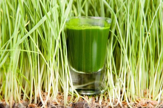 Салат из зеленых ростков пшеницы